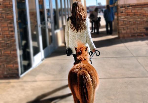 service-animal-blog-1