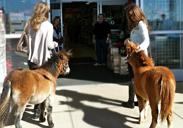 service-animal-blog-3